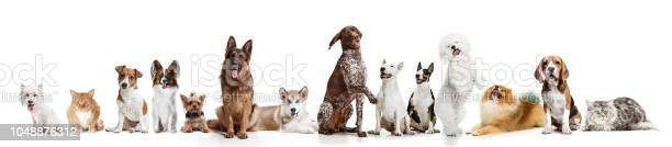 Differents dogs looking at camera isolated on a white background picture id1048876312?b=1&k=6&m=1048876312&s=612x612&h=nly43do6e8zeycqvj4crfluqqso6bn2nqzgpoxwiufy=