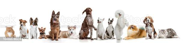 Differents dogs looking at camera isolated on a white background picture id1048876324?b=1&k=6&m=1048876324&s=612x612&h=ij8o0v7tejhbf cta1gtwizspjvijiclho0tzb5j7ki=