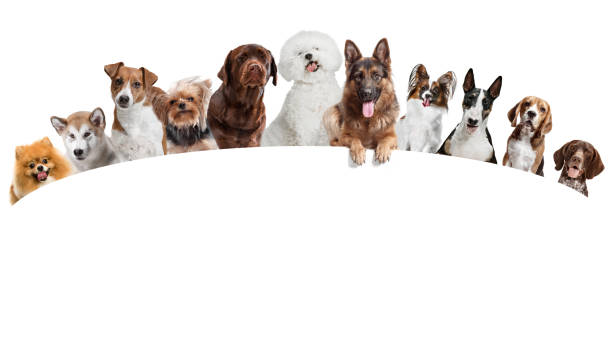 differents dogs looking at camera isolated on a white background - группа объектов стоковые фото и изображения