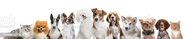 Differents dogs looking at camera isolated on a white background picture id1048876336?b=1&k=6&m=1048876336&s=612x612&h=s9x0vq4u9nhgznagxewvfwcemhedmxlnokskogxnixg=