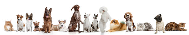 Differents dogs looking at camera isolated on a white background picture id1132995302?b=1&k=6&m=1132995302&s=612x612&w=0&h=u4h8h2g g8unnsycgj4y53ehv emav0s1ofkdswazhm=