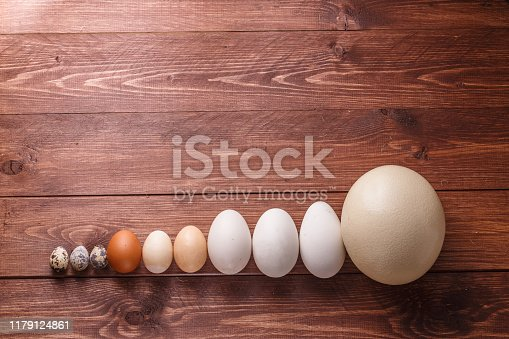 Differet size eggs from different birds, copyspace