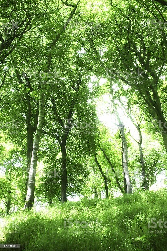 Diffused Green Woodland Tree royalty-free stock photo