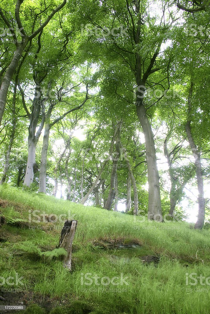 Diffused Woodland Scene and Tree Stump royalty-free stock photo