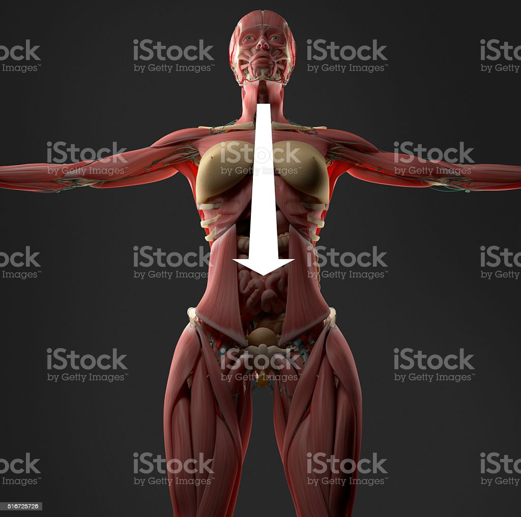 Digestion or indigestion shown on female abdomen anatomy model. stock photo