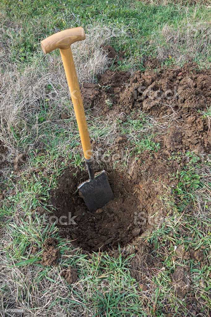 Digging a hole on lawn for plant stock photo