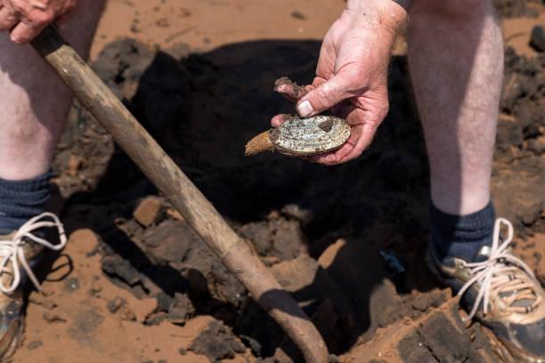 digging clams - mięczak zdjęcia i obrazy z banku zdjęć