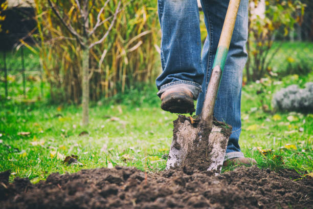 Digging in a garden with a spade Gardener digging in a garden with a spade. Man using a big shovel for digging old lawn. Foot in motion. gardening stock pictures, royalty-free photos & images