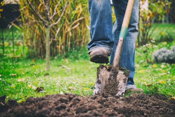 cavando en un jardín con una pala - jardinería fotografías e imágenes de stock