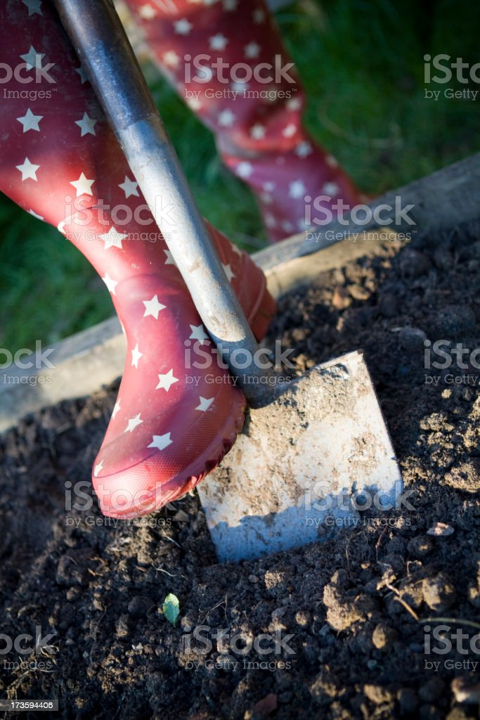 Digging the Veg Patch royalty-free stock photo