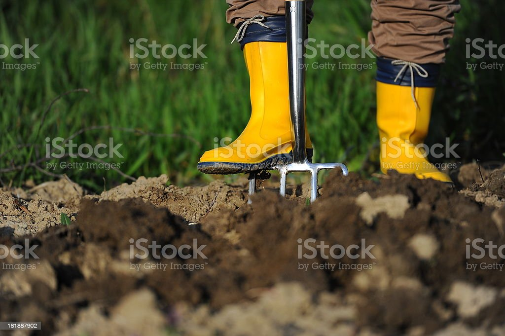 Digging with fork in garden royalty-free stock photo