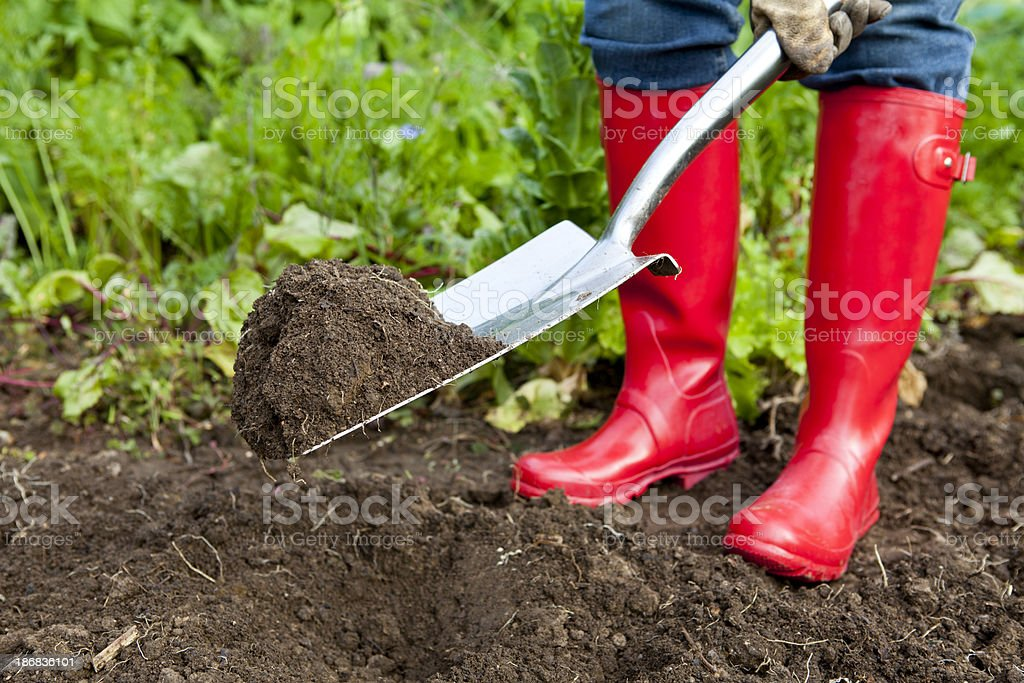 Digging With Red Boots in Vegetable Patch royalty-free stock photo