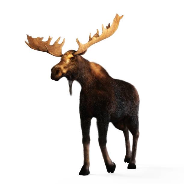 Digital 3d illustration of a moose picture id1169100276?b=1&k=6&m=1169100276&s=612x612&w=0&h= xrs3 zur7iy7pp8fn4eznfjkq dpsksouq4ontisti=