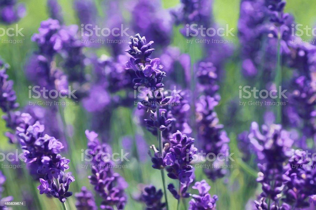 Digital art, artistic composition Close-up of lavender flower stock photo