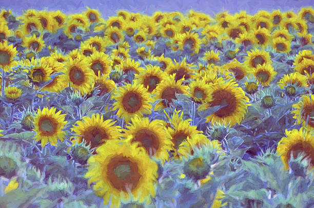 digital art paint-komposition, field sonnenblume, sonnigen tag  - farbfeldmalerei stock-fotos und bilder
