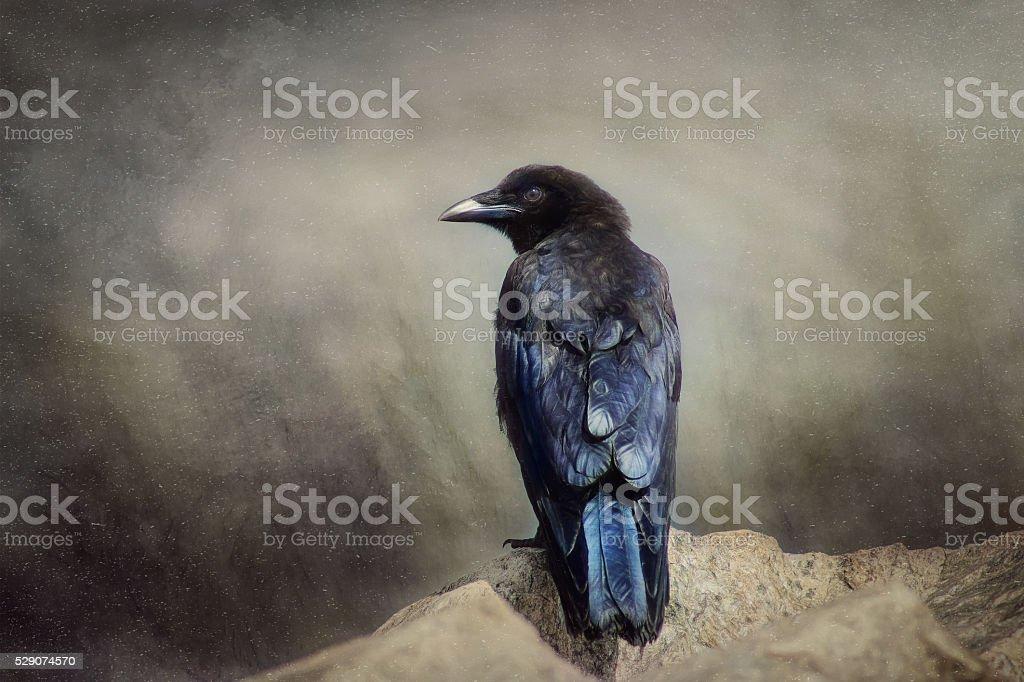 Digital art, paint effect Common Raven portrait (crow) stock photo