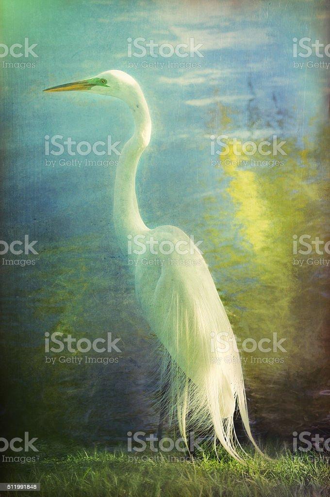 Digital art, paint effect Great Egret (Ardea alba egretta) stock photo