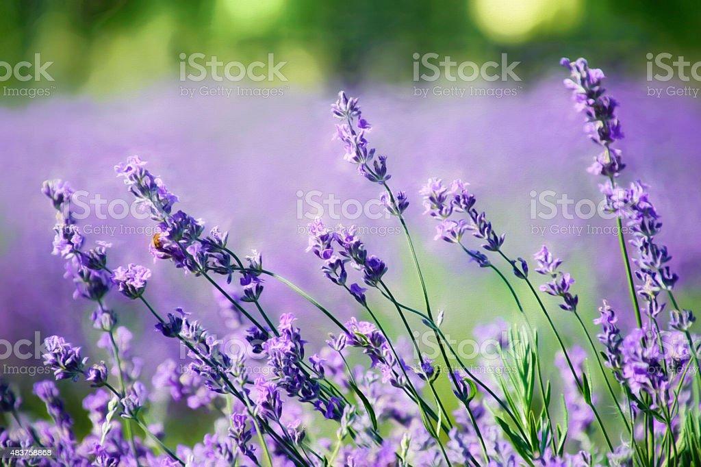Digital art, paint effect, lavender flower on a summer day stock photo