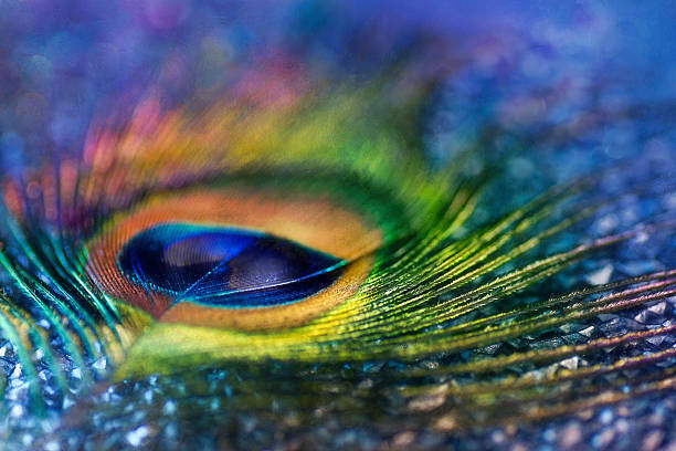 digital art paint-effekt, bunte pfau feder texturierte - pfau bilder stock-fotos und bilder