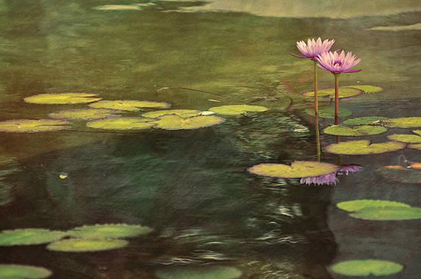 digital art, paint effect, pink water lily grow garden pond - wasserlilien stock-fotos und bilder