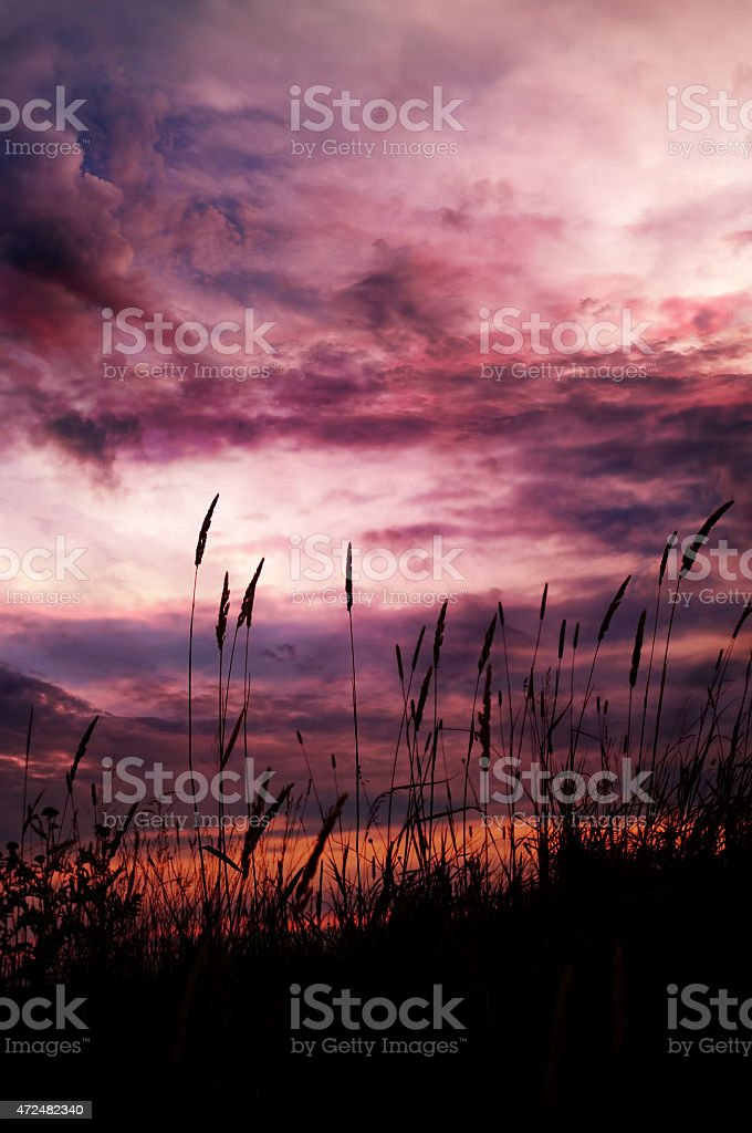 Digital Art Paint Effect Purple Sunset With Tall Grass Stock Photo Download Image Now Istock