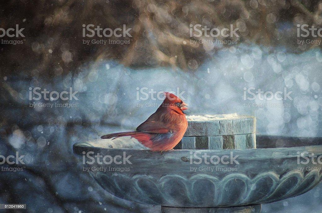 Digital art, paint effect, The Northern Cardinal (Cardinalis cardinalis) stock photo