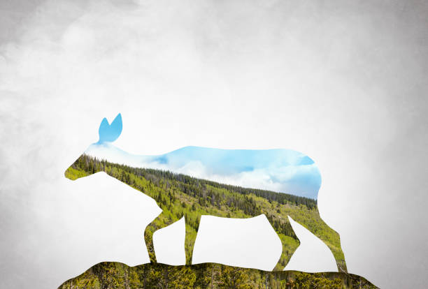 Digital artwork double exposure of a deer and forest Digital artwork double exposure of a deer and forest rocky mountain national park stock pictures, royalty-free photos & images