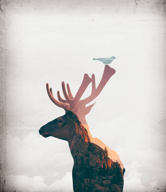 Digital artwork double exposure of elk and mountain Digital artwork double exposure of elk and mountain. rocky mountain national park stock pictures, royalty-free photos & images