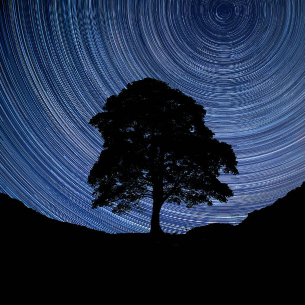 Digital composite image of star trails around Polaris with Beautiful landscape image of Sycamore tree slhouette stock photo