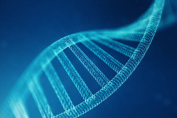 molécula de adn digital, estructura. genoma humano del código binario del concepto. molécula de adn con genes modificados. ilustración 3d - hélice forma geométrica fotografías e imágenes de stock