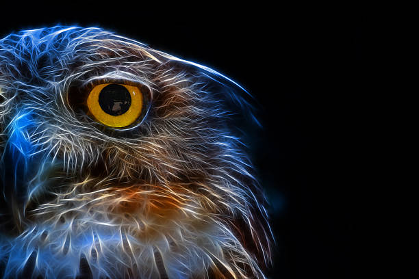 Digital drawing of a owl picture id483056412?b=1&k=6&m=483056412&s=612x612&w=0&h=uypnuvz7bhgmgfhkbfjwhknd8bgjf zrvhtyeh itpy=