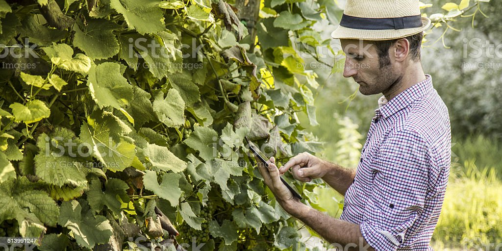 Digital farmer with a tablet stock photo