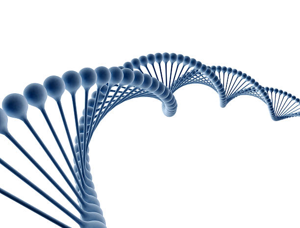 Digital illustration of a dna Digital illustration of a dna isolated on white background helix model stock pictures, royalty-free photos & images
