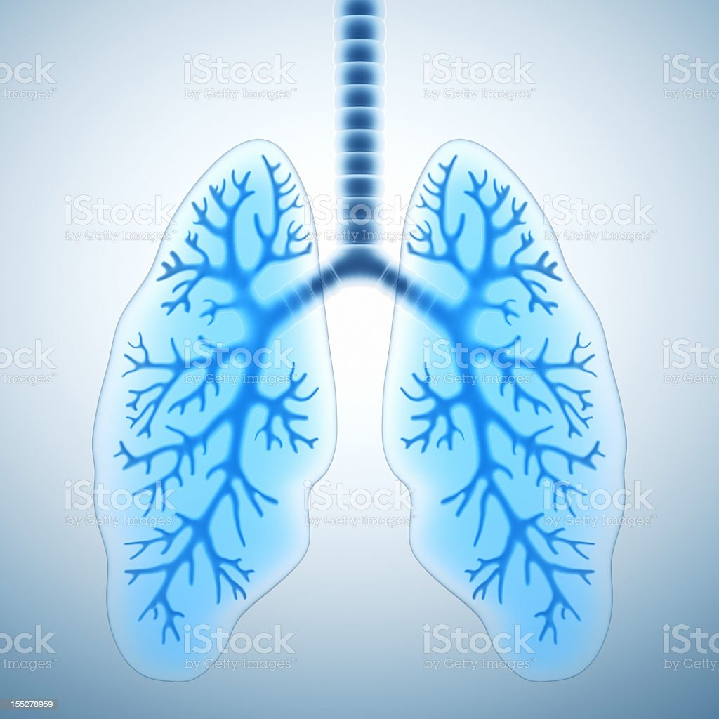 A digital image of a pair of blue healthy lungs  stock photo