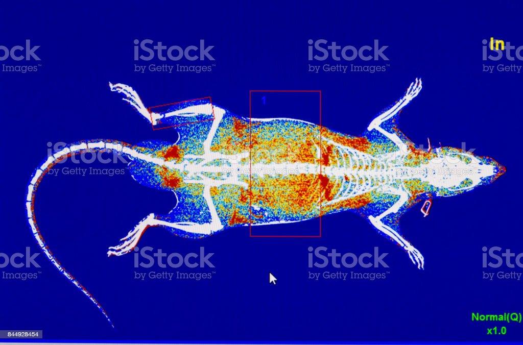 Digital image of animal x-ray stock photo