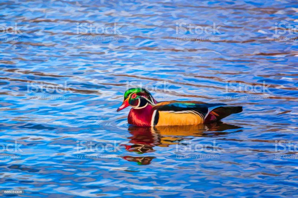Digital Impression of Wood Duck Drake stock photo