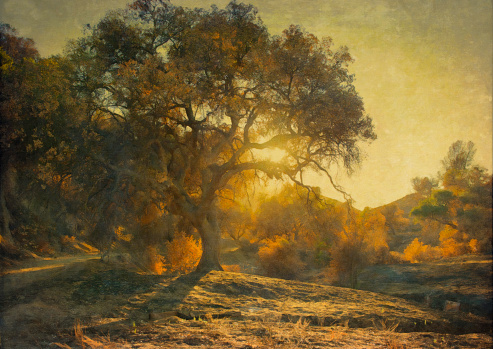 Digital oil painting of an oak tree at sunset