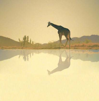 Digital oil painting done in photoshop of giraffe by water.  All reference photos were my own.