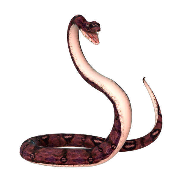3D digital render anaconda snake on white – zdjęcie