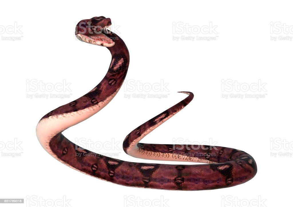 3D digital render anaconda snake on white stock photo