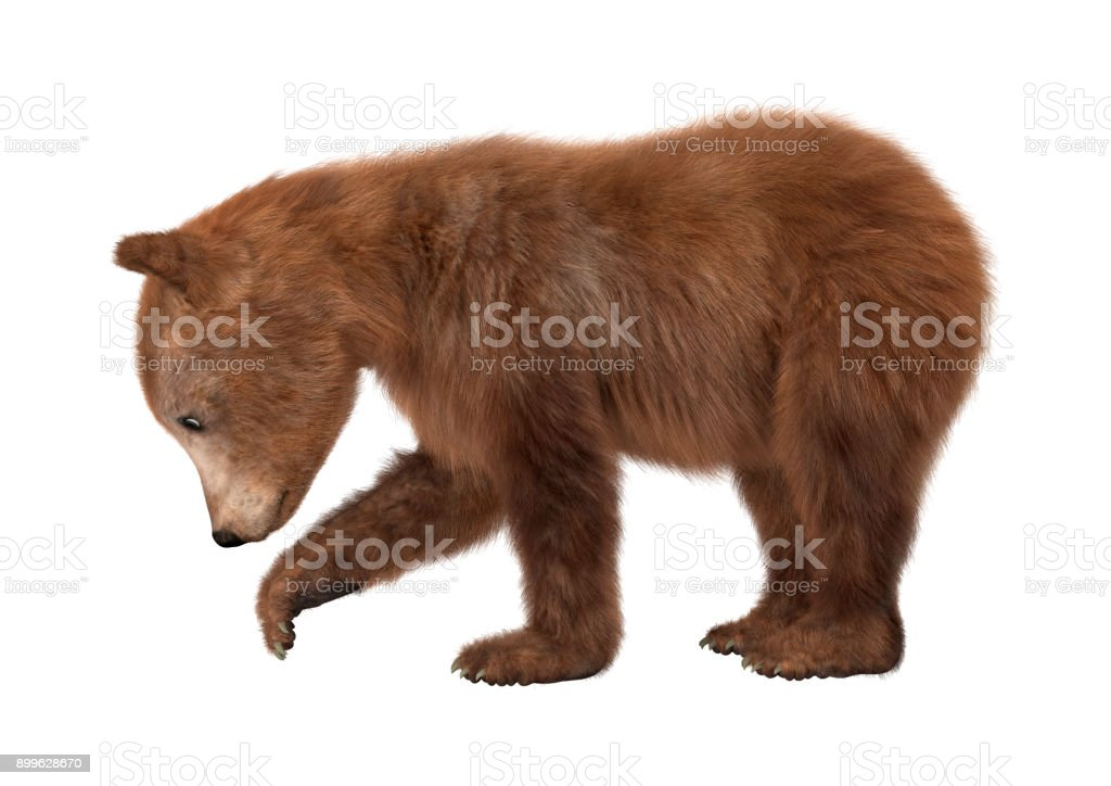 3D digital render brown bear cub on white stock photo