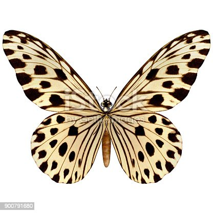 istock 3D digital render butterfly on white 900791680