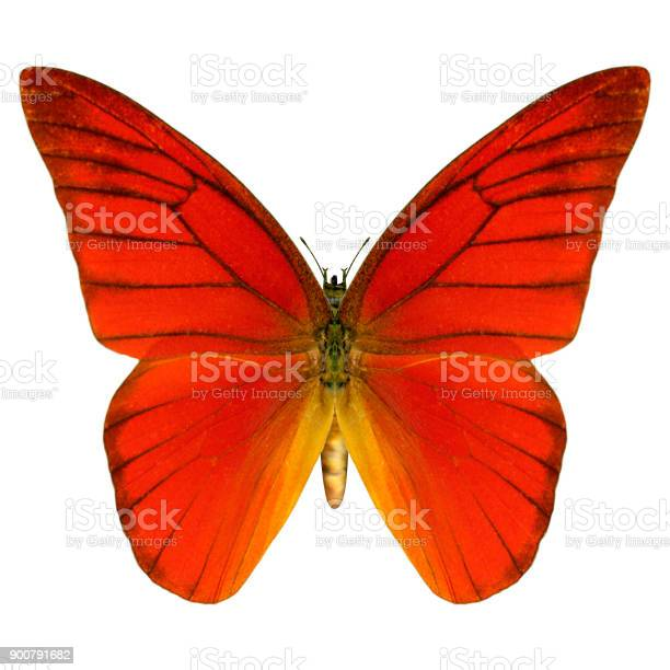Digital render butterfly on white picture id900791682?b=1&k=6&m=900791682&s=612x612&h=6vx6y 0nwtlwqwsq3tz33zlcl h2hi43n3y6iuu7iyo=
