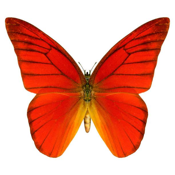 Digital render butterfly on white picture id900791682?b=1&k=6&m=900791682&s=612x612&w=0&h=dromggyrhzbze6aa 3mpodqbwpucyaq4 wum3ztb7py=