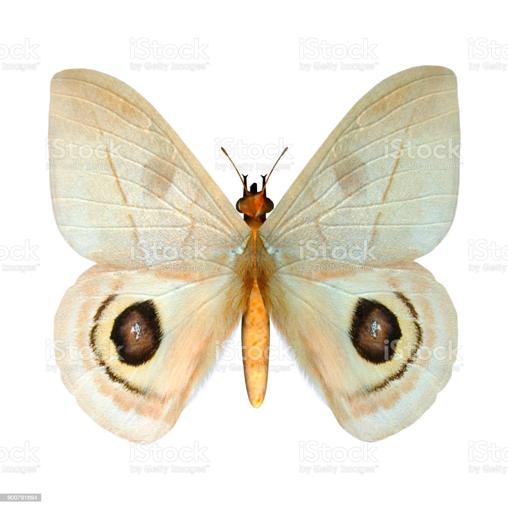 3D digital render butterfly on white stock photo