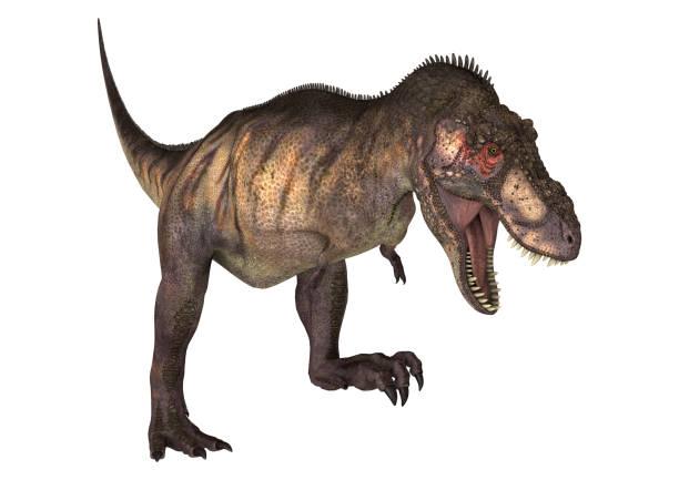 digitale 3d render dinosaurier tyrannosaurus auf weiß - dinosaurier illustration stock-fotos und bilder