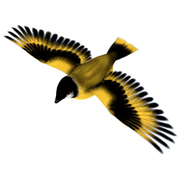 3D digital render flying bird on white stock photo