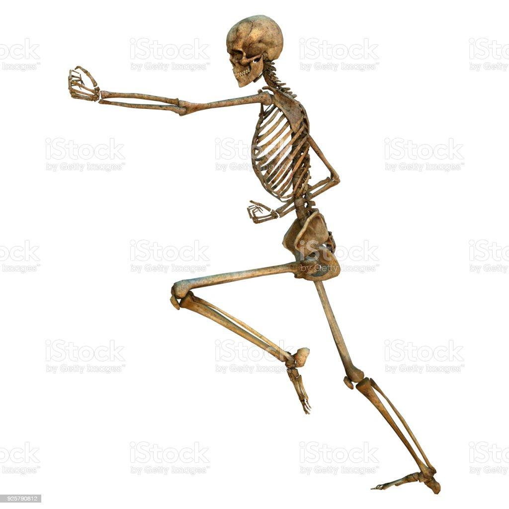 3D digital render human skeleton on white stock photo