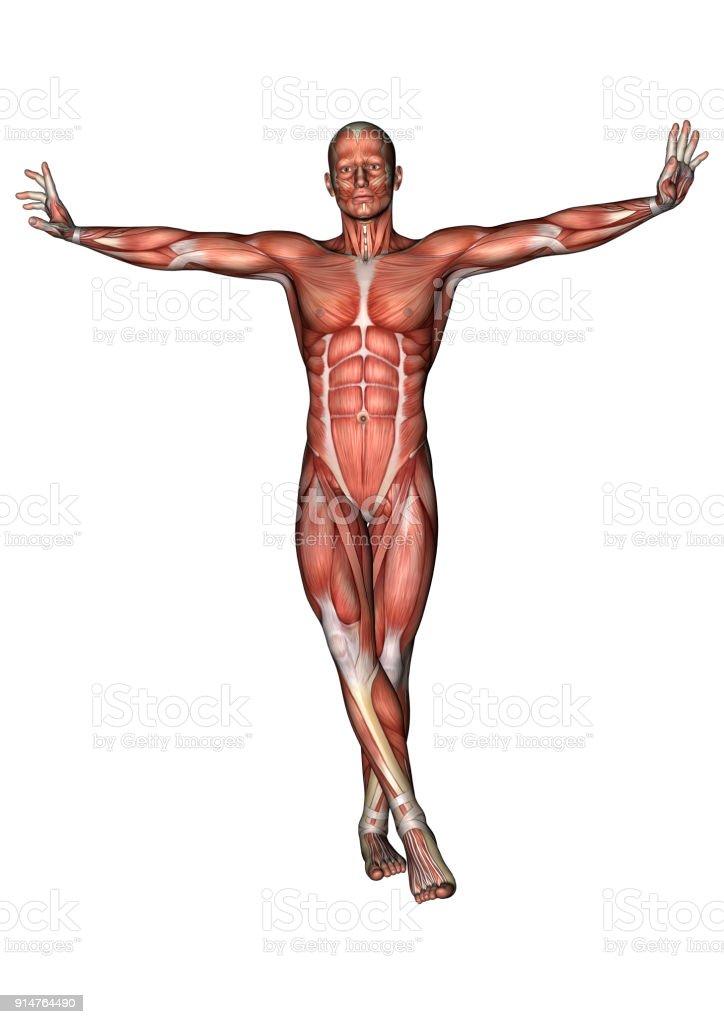Fotografía de Digital 3d Render Anatomía Masculina Figura En Blanco ...
