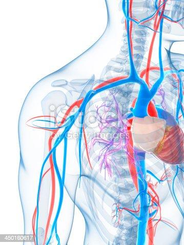 Digital Representation Of The Human Vascular System Stock Photo ...